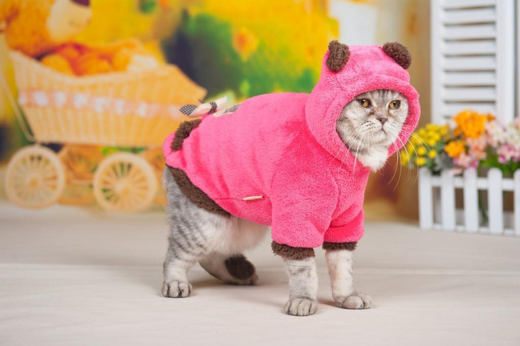 天冷出门的时候完全不怕冷,超级保暖  1 背上一个超可爱的绣花小猫咪
