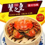 【蟹之皇】正宗阳澄湖 鲜活大闸蟹(5公4.0~4.4两;